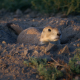 Prairie Dog Hunting