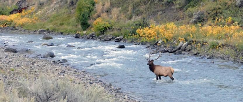 Preparing for a Backcountry Elk Hunt